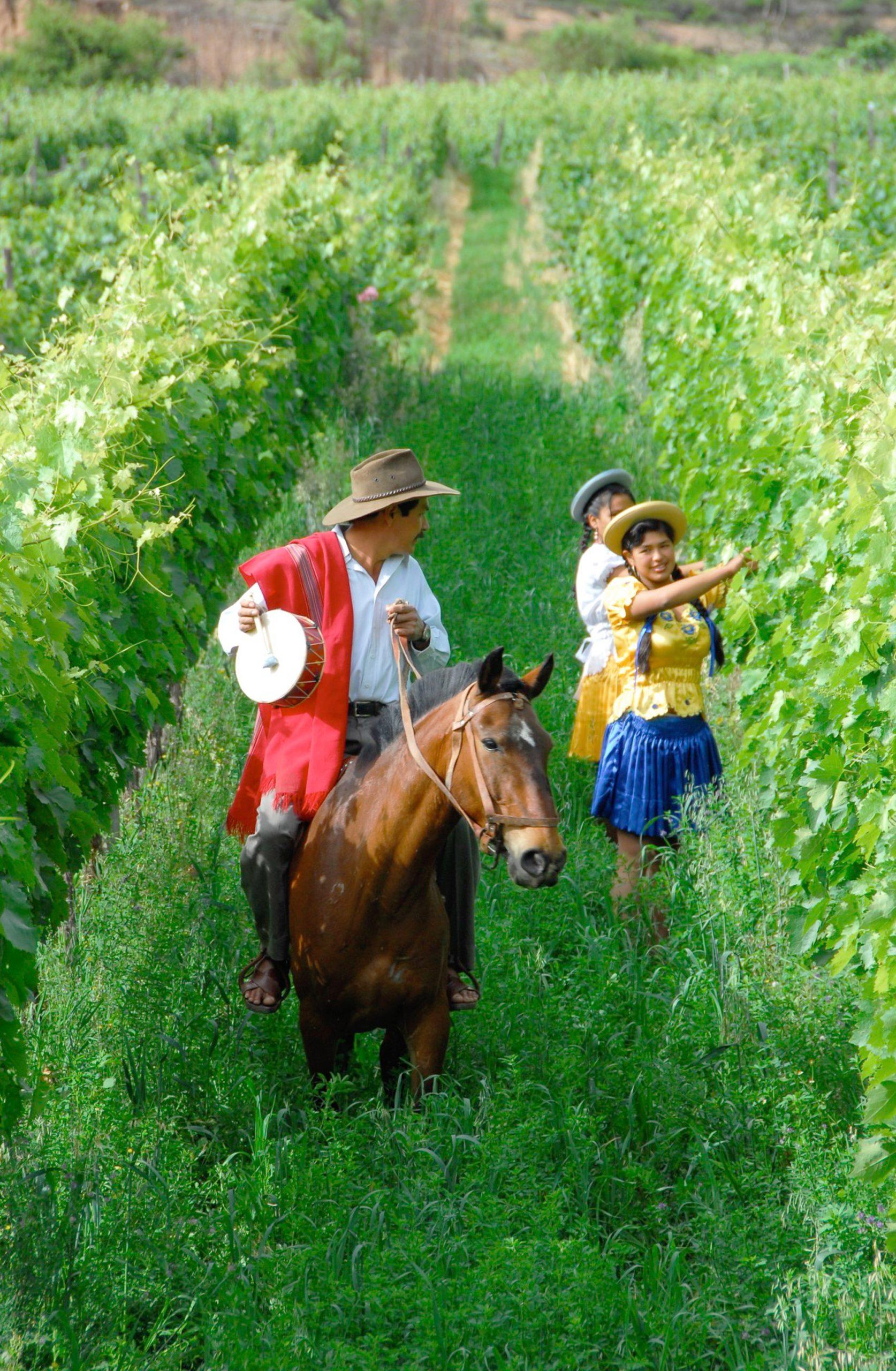 13 Tarija - ruta del vino